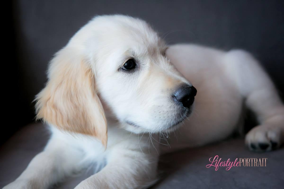 Letter From Denver – Service Dog In Training