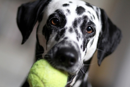 healthy dog article